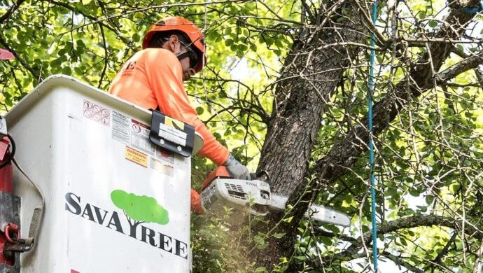 Arborist-Consultations-Tallahassee Tree Trimming and Stump Grinding Services-We Offer Tree Trimming Services, Tree Removal, Tree Pruning, Tree Cutting, Residential and Commercial Tree Trimming Services, Storm Damage, Emergency Tree Removal, Land Clearing, Tree Companies, Tree Care Service, Stump Grinding, and we're the Best Tree Trimming Company Near You Guaranteed!