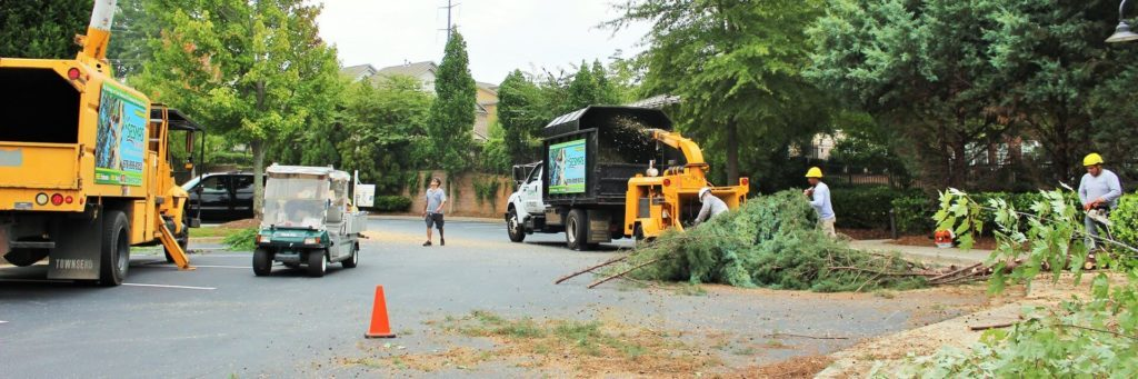 Commercial-Tree-Services-Tallahassee Tree Trimming and Stump Grinding Services-We Offer Tree Trimming Services, Tree Removal, Tree Pruning, Tree Cutting, Residential and Commercial Tree Trimming Services, Storm Damage, Emergency Tree Removal, Land Clearing, Tree Companies, Tree Care Service, Stump Grinding, and we're the Best Tree Trimming Company Near You Guaranteed!