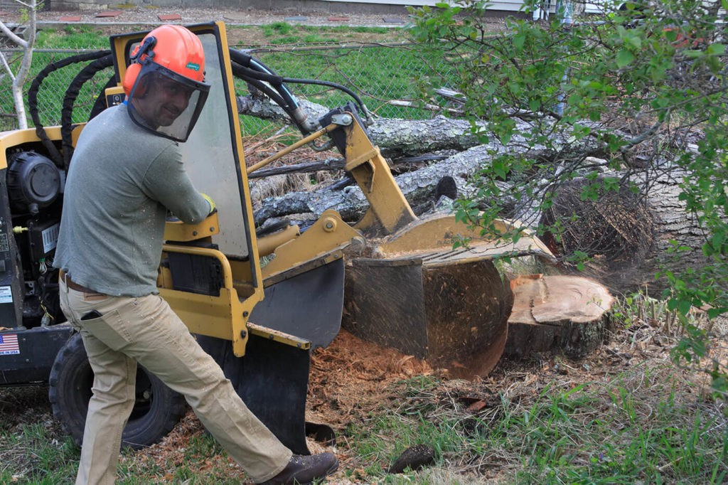 Contact Us-Tallahassee Tree Trimming and Stump Grinding Services-We Offer Tree Trimming Services, Tree Removal, Tree Pruning, Tree Cutting, Residential and Commercial Tree Trimming Services, Storm Damage, Emergency Tree Removal, Land Clearing, Tree Companies, Tree Care Service, Stump Grinding, and we're the Best Tree Trimming Company Near You Guaranteed!