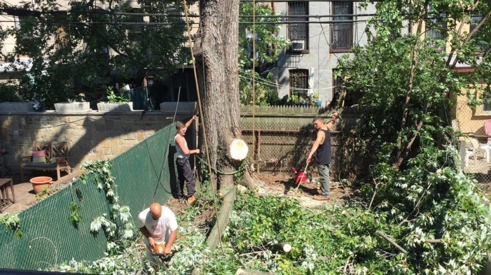 Emergency-Tree-Removal-Tallahassee Tree Trimming and Stump Grinding Services-We Offer Tree Trimming Services, Tree Removal, Tree Pruning, Tree Cutting, Residential and Commercial Tree Trimming Services, Storm Damage, Emergency Tree Removal, Land Clearing, Tree Companies, Tree Care Service, Stump Grinding, and we're the Best Tree Trimming Company Near You Guaranteed!