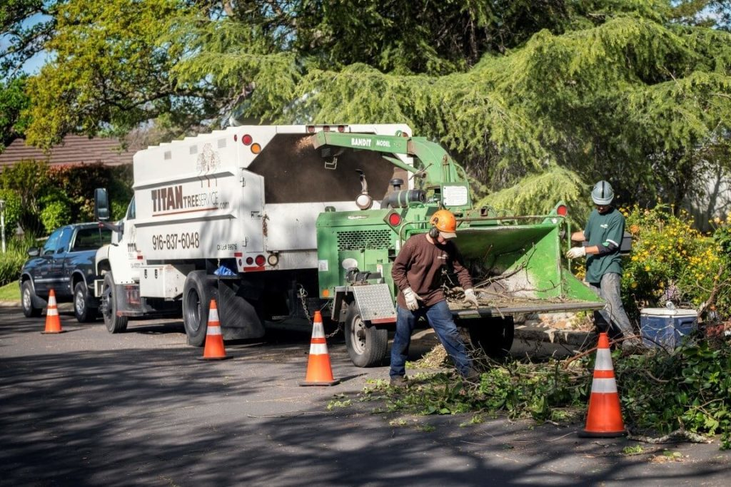 Residential-Tree-Services-Tallahassee Tree Trimming and Stump Grinding Services-We Offer Tree Trimming Services, Tree Removal, Tree Pruning, Tree Cutting, Residential and Commercial Tree Trimming Services, Storm Damage, Emergency Tree Removal, Land Clearing, Tree Companies, Tree Care Service, Stump Grinding, and we're the Best Tree Trimming Company Near You Guaranteed!