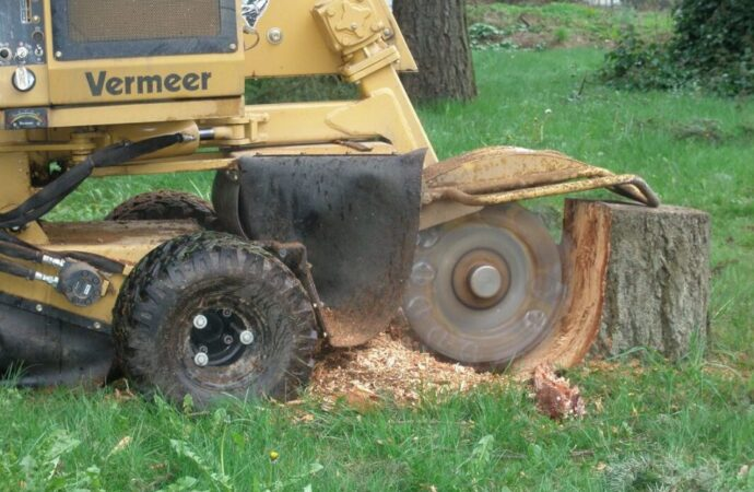 Stump-Grinding-Tallahassee Tree Trimming and Stump Grinding Services-We Offer Tree Trimming Services, Tree Removal, Tree Pruning, Tree Cutting, Residential and Commercial Tree Trimming Services, Storm Damage, Emergency Tree Removal, Land Clearing, Tree Companies, Tree Care Service, Stump Grinding, and we're the Best Tree Trimming Company Near You Guaranteed!