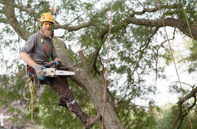 Tree-Cutting-Tallahassee Tree Trimming and Stump Grinding Services-We Offer Tree Trimming Services, Tree Removal, Tree Pruning, Tree Cutting, Residential and Commercial Tree Trimming Services, Storm Damage, Emergency Tree Removal, Land Clearing, Tree Companies, Tree Care Service, Stump Grinding, and we're the Best Tree Trimming Company Near You Guaranteed!