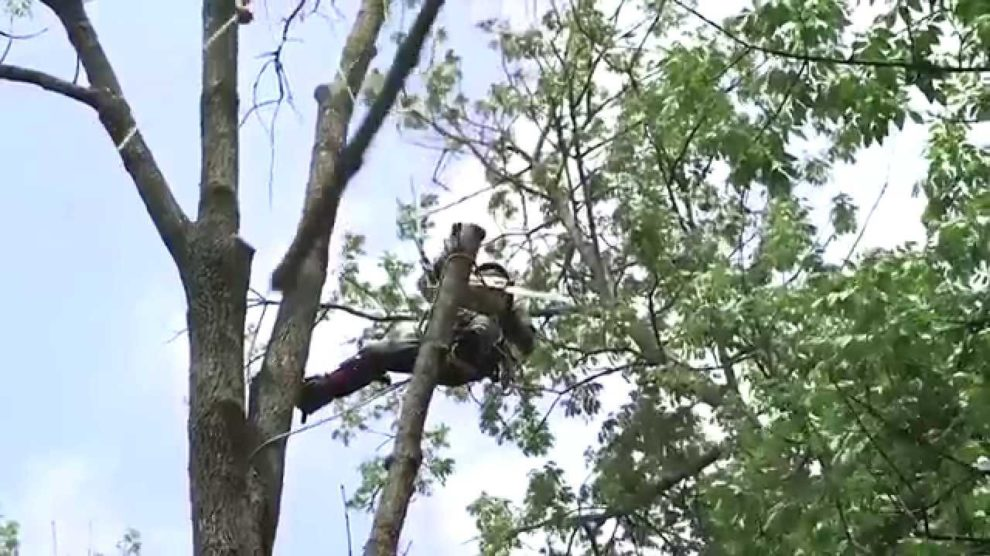 Tree-Removal-Tallahassee Tree Trimming and Stump Grinding Services-We Offer Tree Trimming Services, Tree Removal, Tree Pruning, Tree Cutting, Residential and Commercial Tree Trimming Services, Storm Damage, Emergency Tree Removal, Land Clearing, Tree Companies, Tree Care Service, Stump Grinding, and we're the Best Tree Trimming Company Near You Guaranteed!
