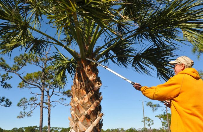 Woodville-Tallahassee Tree Trimming and Stump Grinding Services-We Offer Tree Trimming Services, Tree Removal, Tree Pruning, Tree Cutting, Residential and Commercial Tree Trimming Services, Storm Damage, Emergency Tree Removal, Land Clearing, Tree Companies, Tree Care Service, Stump Grinding, and we're the Best Tree Trimming Company Near You Guaranteed!